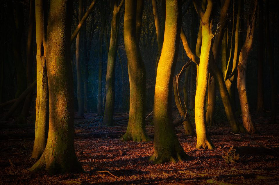 Location scouting and where to find the 'Dancing Trees' at 'Speulderbos'.